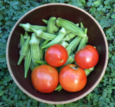 Tomatoes are just starting to ripen and okra is going gang-busters.
