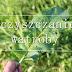 Oczyszczanie wątroby | Skutki zanieczyszczenia, objawy |Funkcje wątroby  cz I