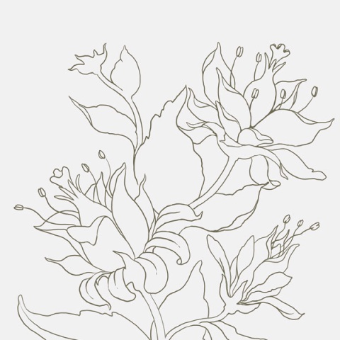 Pictures Of Flowers You Can Color