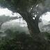 Τα δέντρα