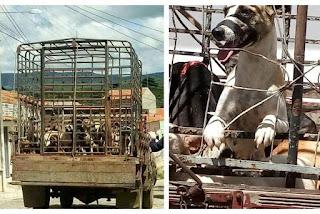 Laudo pericial confirma morte violenta de cães em Igaracy