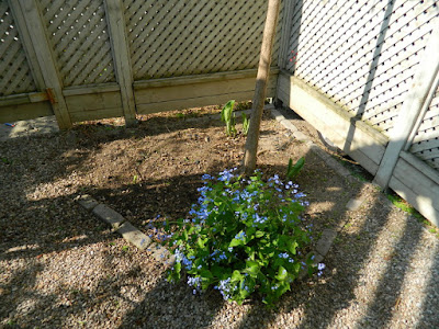 Toronto Spring Backyard Garden Cleanup Cabbagetown After by Paul Jung Gardening Services a Toronto Gardening Company