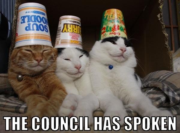 cats-the-council-has-spoken.jpg