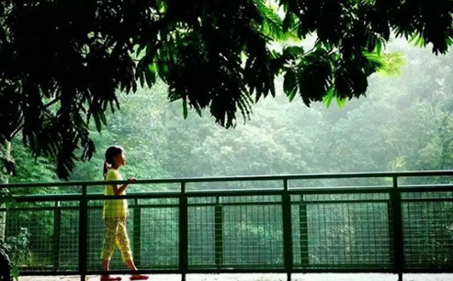 Berjalan, Berfoto, Mendengar Kicauan Burung, Menghirup Udara Segar di Forest Walk Baksil