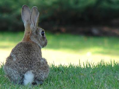 Rabbit is sick