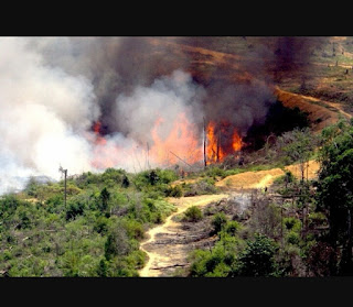 causes of forest fires