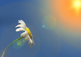 Fiore di mattina
