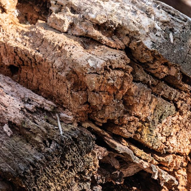 swamp wood © Chris Zintzen | panAm productions