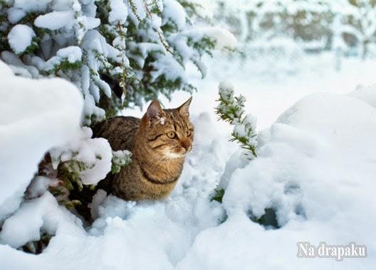 Karmy dla kotów wychodzących