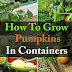 How To Grow Pumpkins In Containers the Easy Way