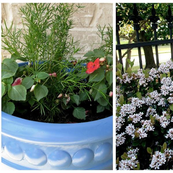 My Little Blue Flower Pots