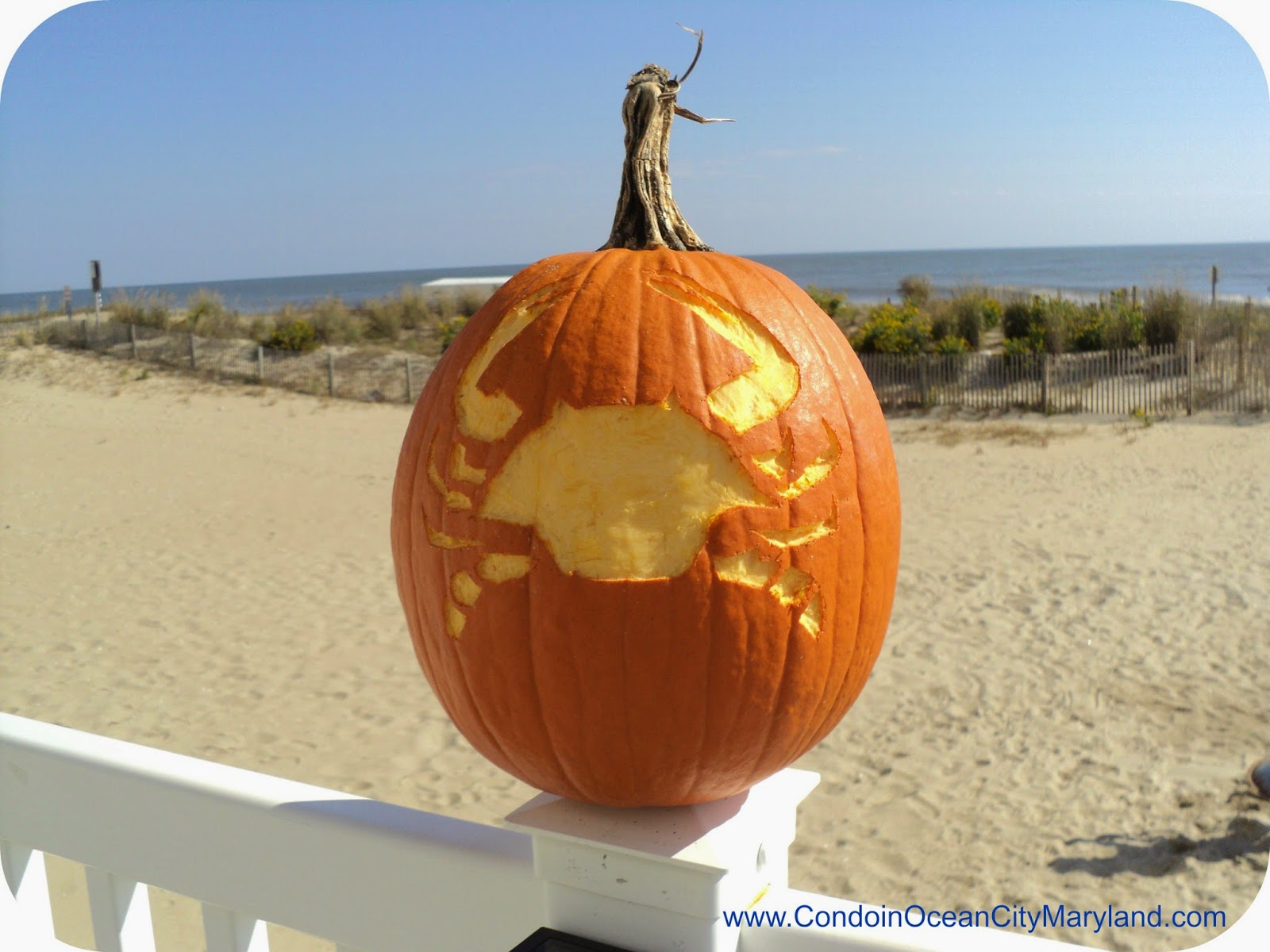 Great blue crab pumpkin www.condoinoceancitymaryland.com