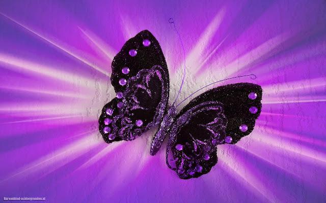 Paarse namaak vlinder aan de muur