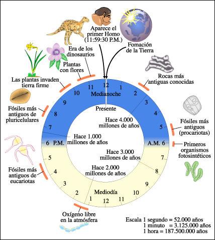 Resultado de imagen de evolucion de la tierra desde su formacion hasta hoy
