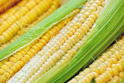 Peluang Usaha Sayuran Jagung Manis