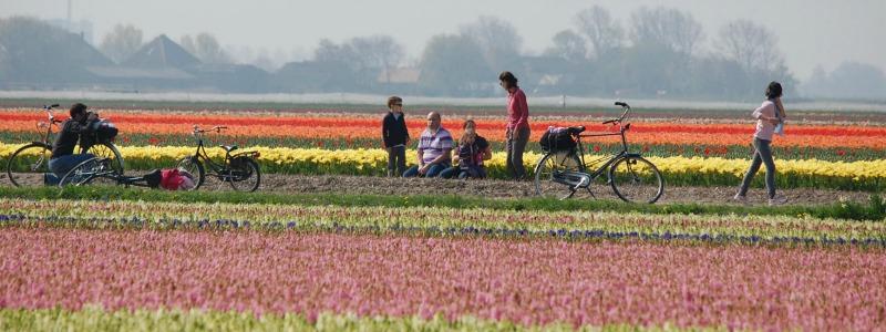 Ruta del tulipán a bici