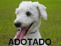 http://oscaesdoparque.blogspot.com/2013/10/postagem-r-132.html