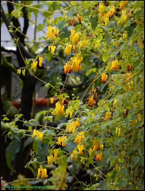 Immagini di giardini fioriti - Immagini di giardini fioriti ...
