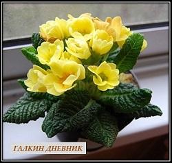 cveti komnatnierasteniya posadkaiuhod houseplants 屋内植物 室內植物 доторургамал نباتات داخلية