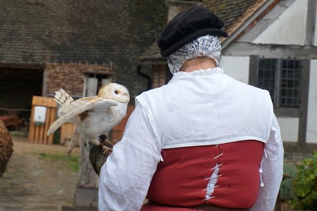 Owl at Mary Arden's Farm
