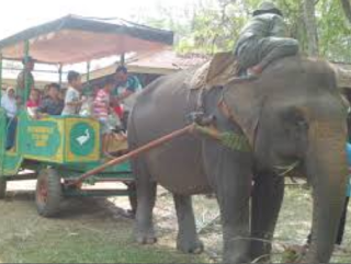 Taman Nasional Way Kambas Lampung