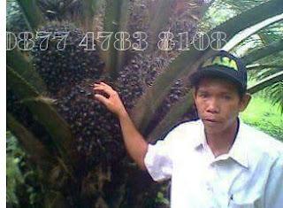 jenis pupuk untuk kelapa sawit terbaik memperbesar buah