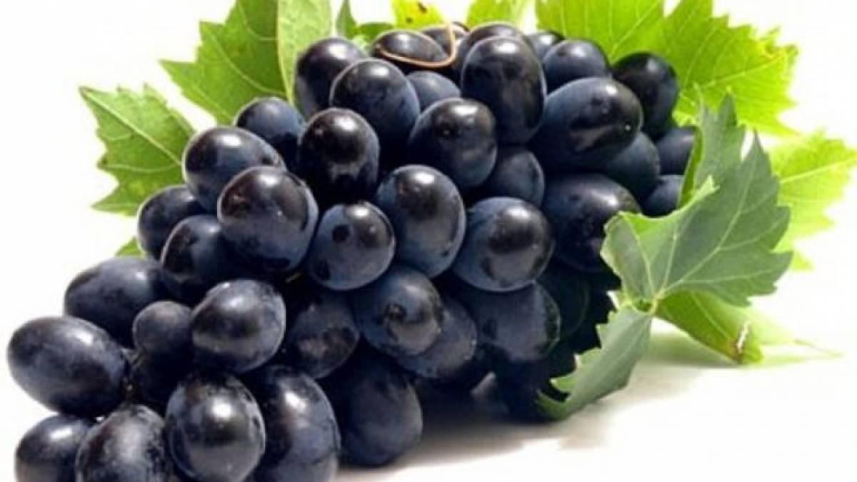15 Manfaat Anggur Hitam Bagi Kesehatan Kita