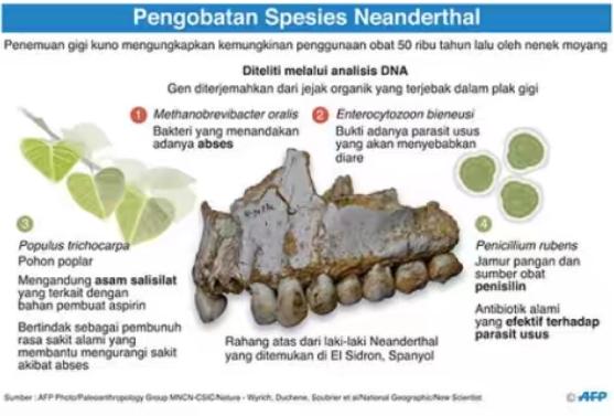 Plak Gigi Ungkap Pola Makan dan Obat Manusia Purba