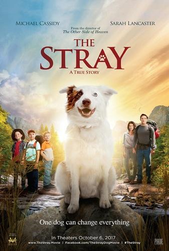 Film The Stray 2017