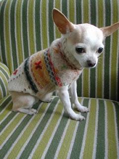 tutorial per realizzare cappottino cane con un vecchio maglione