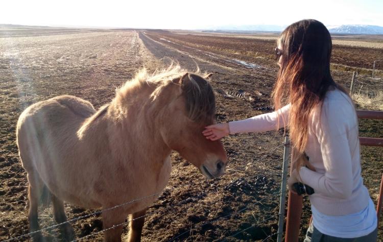 Icelandic Pony, Euriental