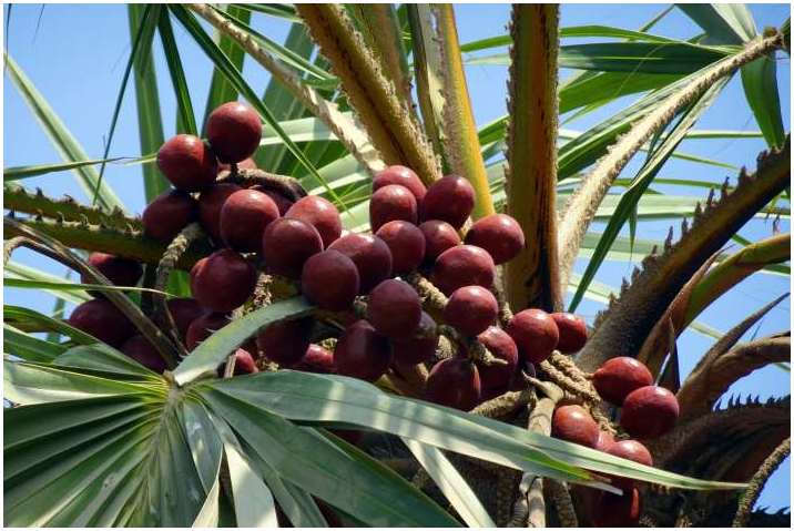 Supplier Buah Zuriat Paling Murah di Orchard Singapore