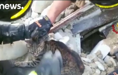 """La """"gata milagro"""" que sobrevive 16 días bajo escombros"""