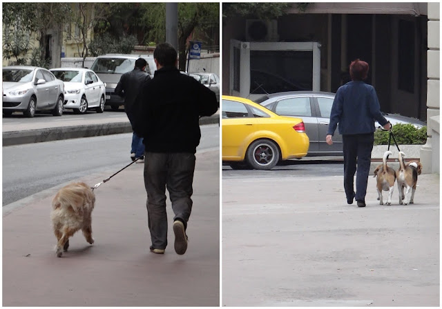 It's dog friendly city in Istanbul, Turkey even though majority of the locals are Muslim