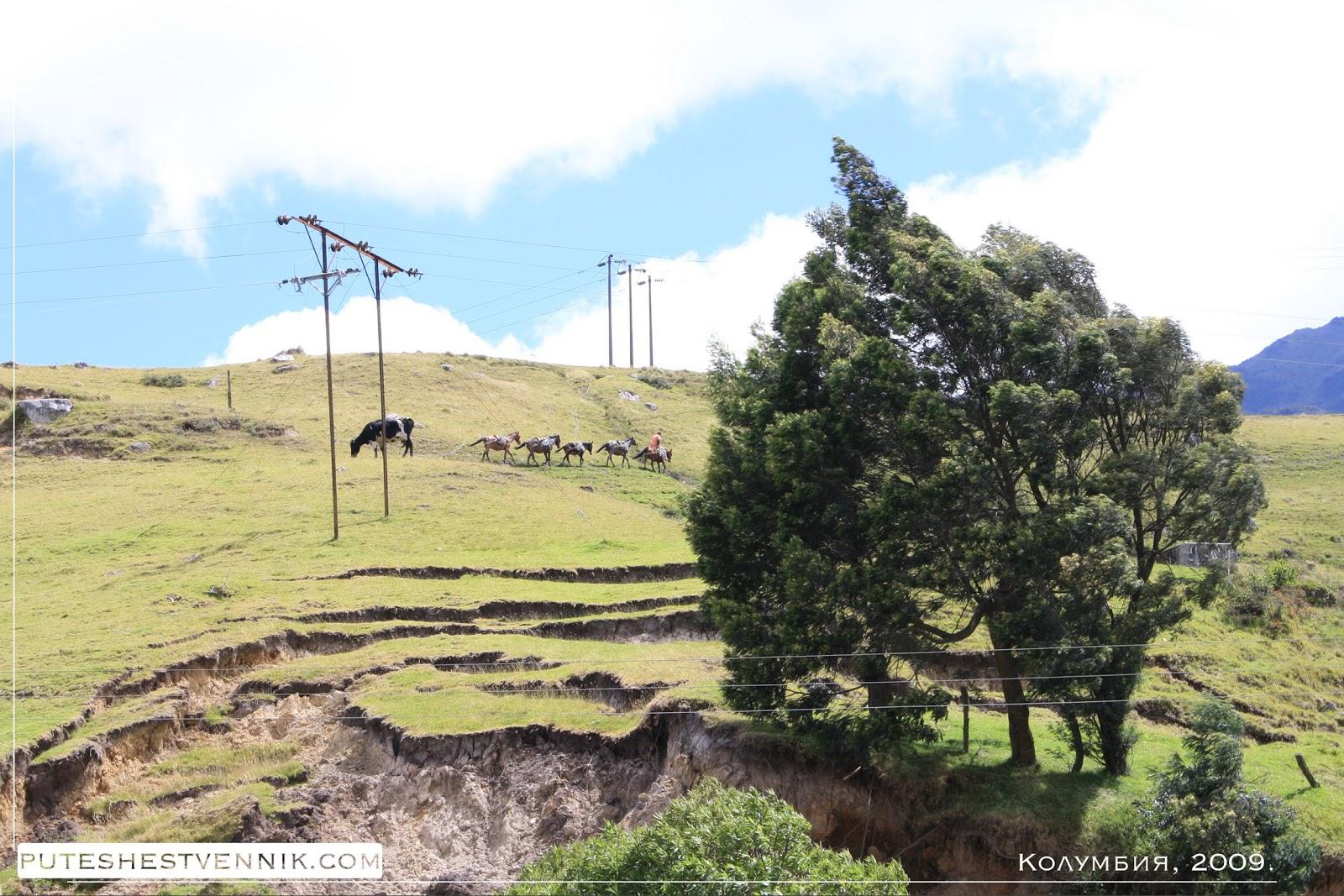 Караван лошадей на склоне горы