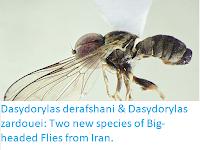 https://sciencythoughts.blogspot.com/2018/01/dasydorylas-derafshani-dasydorylas.html