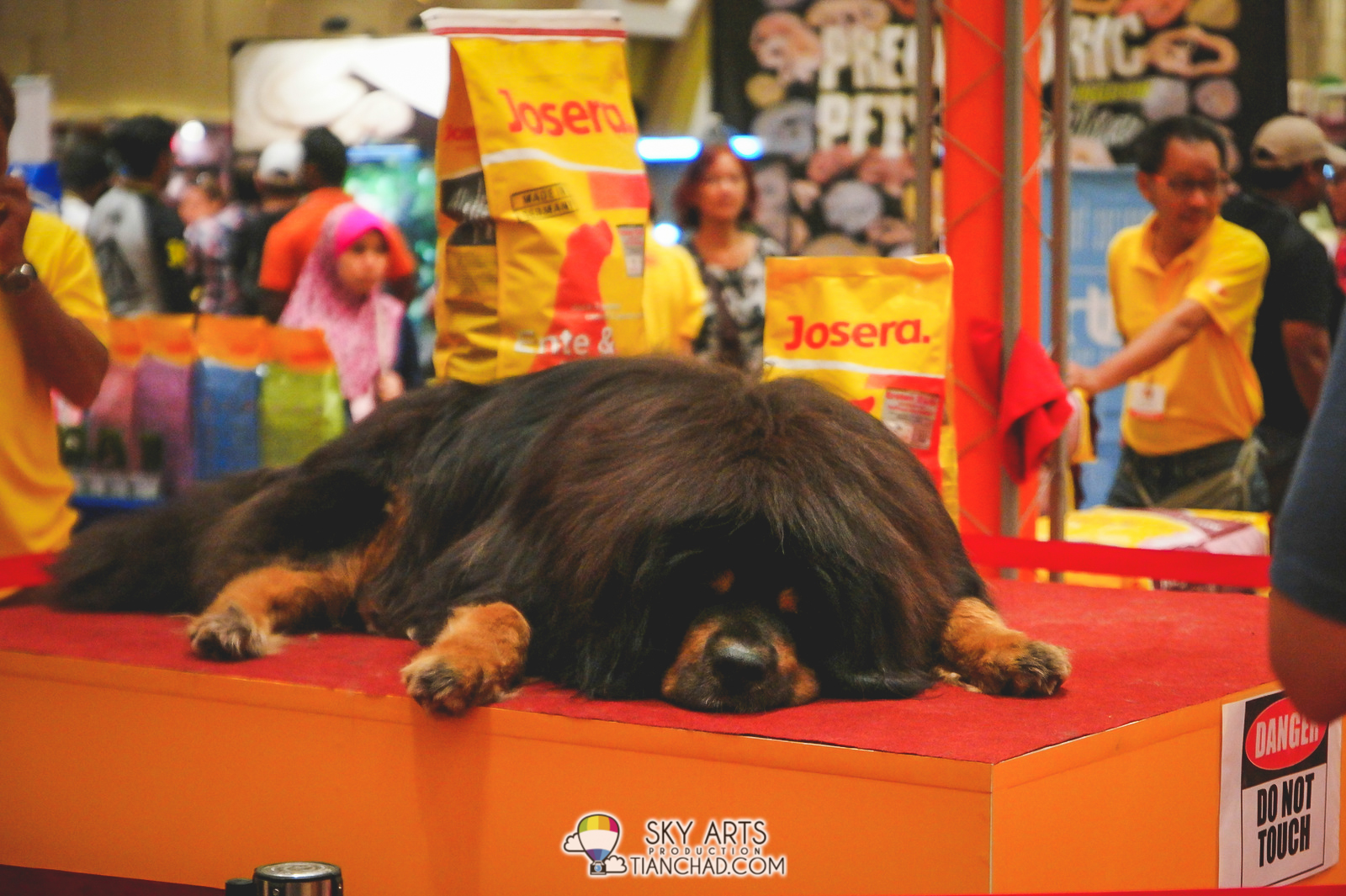 The first thing I saw is this huge Tibetan Mastiff dog on an elevated platform. He seems bored
