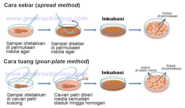 laporan isolasi mikroba dari lingkungan