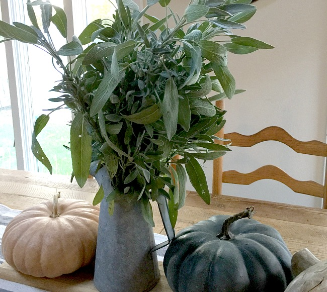 Harvesting Sage for a Beautiful Centerpiece