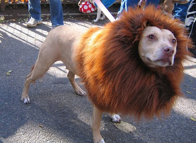 12 Creative and Unusual Dog Costumes (12) 12