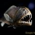 Ikan - ikan Unik Dari Dasar Laut