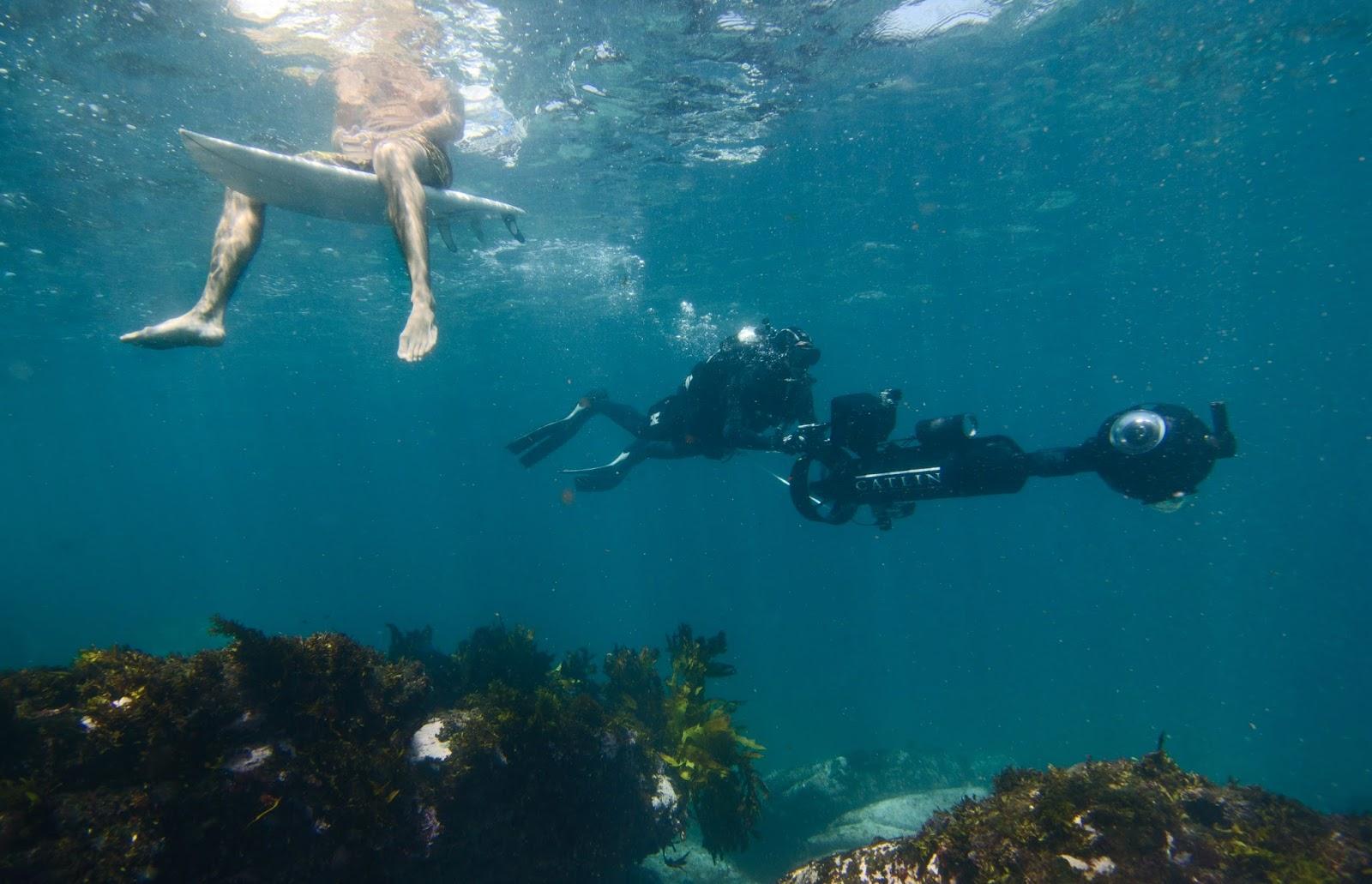Official Google Australia Blog: Sydney's underwater world is ... on google map hawaiian, google earth underwater, google street view, google underwater mr.doob, google gravity underwater,