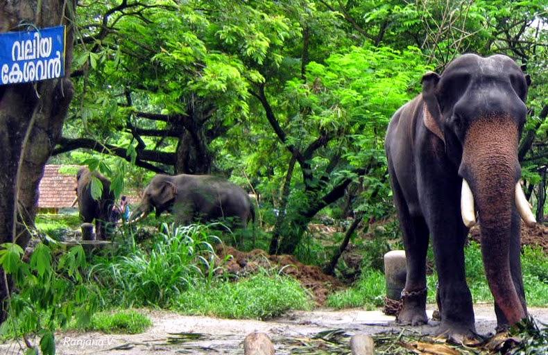 Kalpanthakalam: Punnathur Kotta Elephant Sanctuary or ...