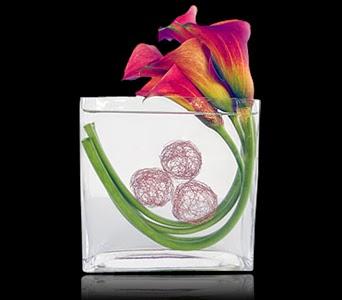 Curvaceous Calla Lilies