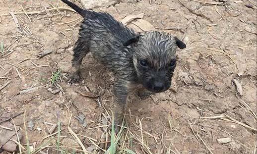 Chú chó nhỏ chẳng may bị đuối nước