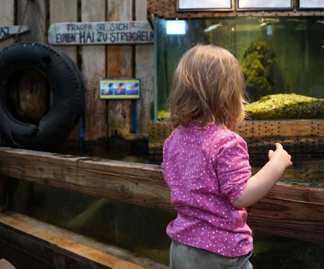 Spaß und Action für die ganze Familie: Das KidsVIP Programm von Westerland.dk Dänemark Urlaub Kinder Ausflüge Attraktionen Jyllands Aquarium Thyboroen