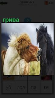 Стоят две лошади  разной масти с великолепной гривой у каждой