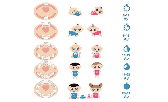 Bebeklerde Hangi Ay Hangi Diş Çıkar