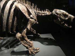 大英自然史博物館展⑧