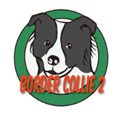 Border Collie Daily 2